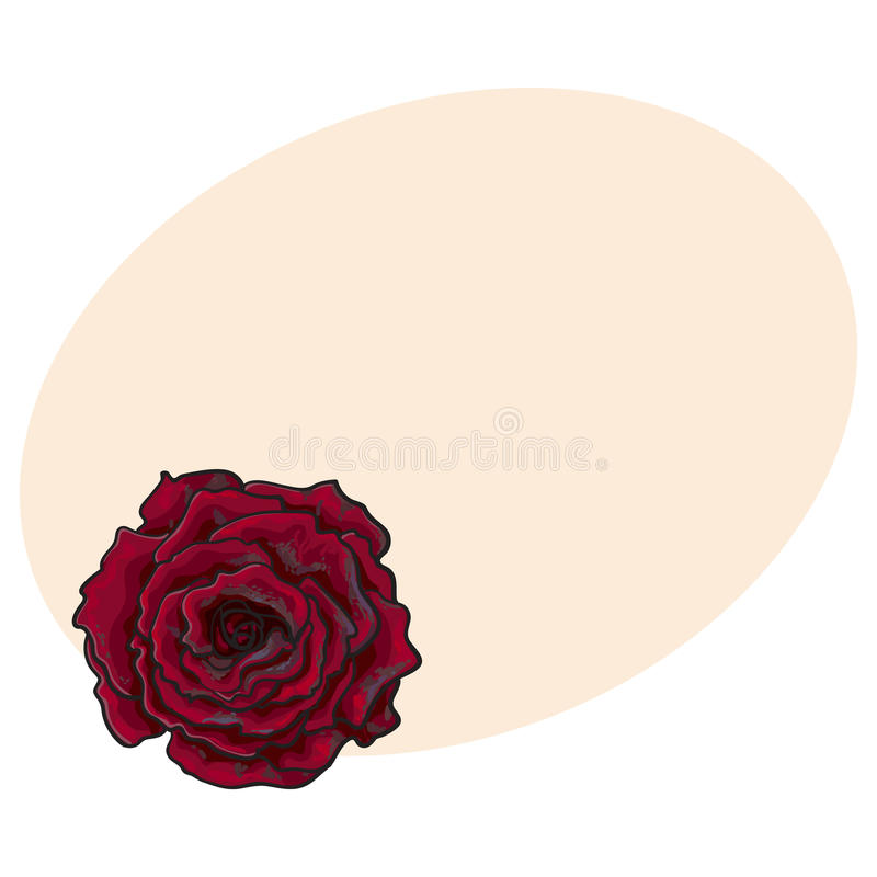 Deep red, ruby rose, top view isolated sketch vector illustration. Deep red, ruby rose bud, top view sketch style vector illustration isolated on background with royalty free illustration