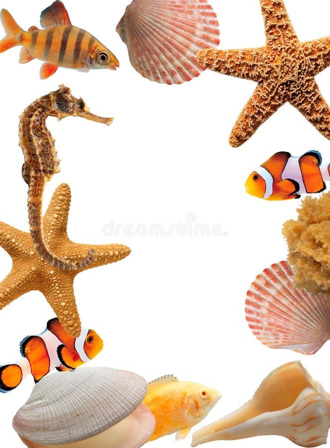 Deep sea stock images