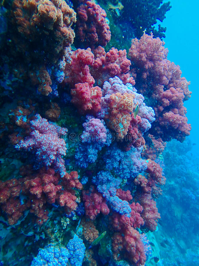 Deep sea and coral reef, colorful corals in ocean landscape.  stock image