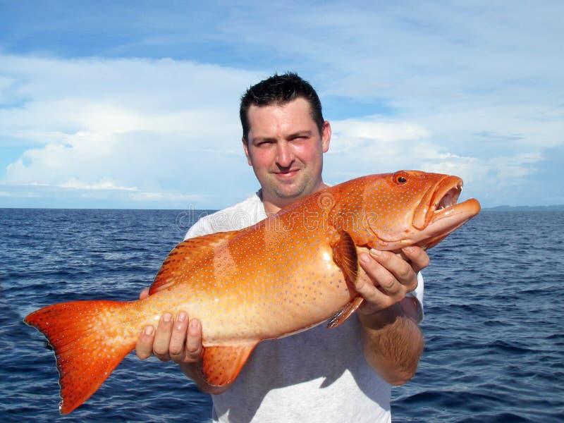 Deep sea fishing. grouper fish royalty free stock image