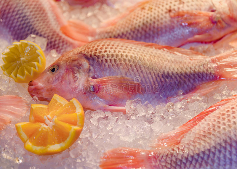 Deep sea fresh fish bass from North Sea, lemon, orange lie on ice. Deep sea fresh fish bass, lemon, orange lie on ice. Close-up stock photos