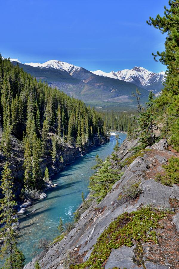 Deep steep canyon with turquoise blue wild river. Mountains covered with snow, forrest on shore, blue sky, sunny day. Rocky Mountains, Canada stock photography