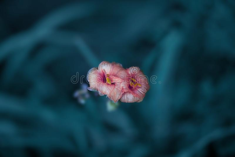 Deep turquoise grass and pink flowers stock photography