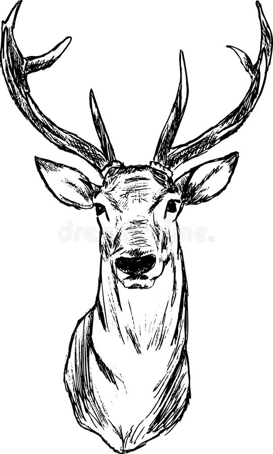 Deer. Vector - Deer - hand draw , isolated on background