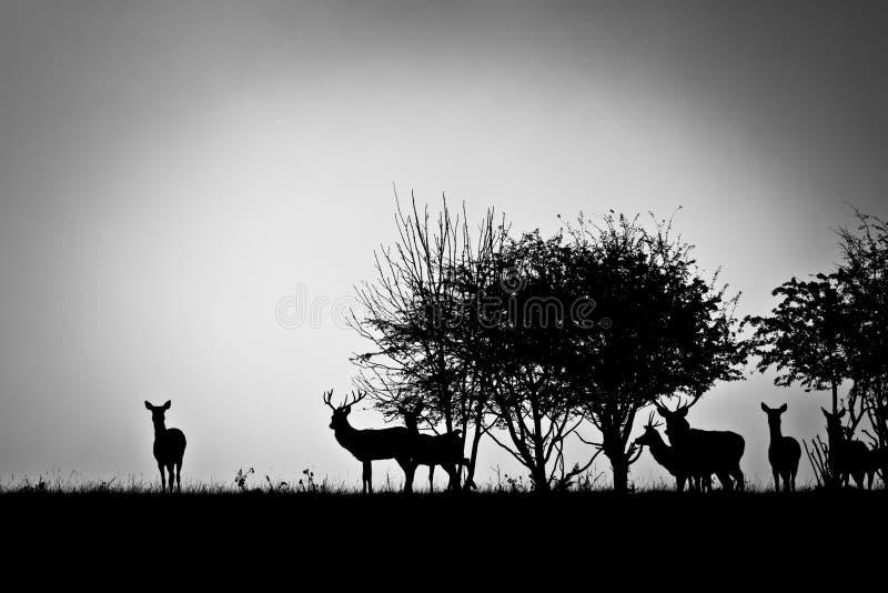 Deer. An image of some deer in the morning mist