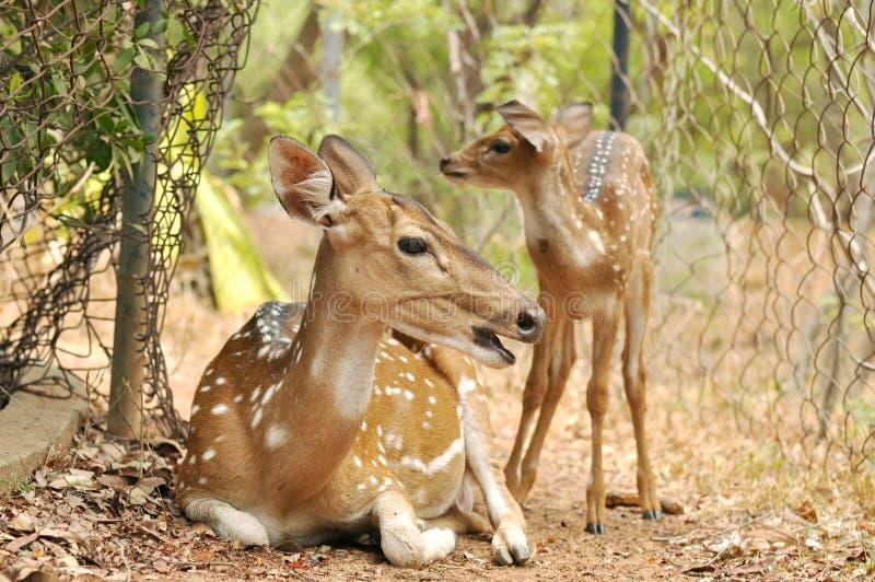 Download Deer Stock Photo - Image: 25327380