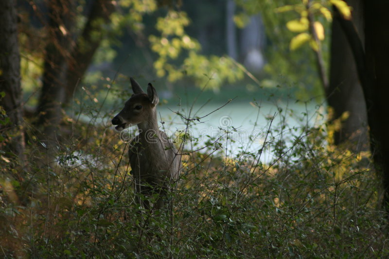 Download Deer stock image. Image of weeds, trees, food, grass, feed - 3725777