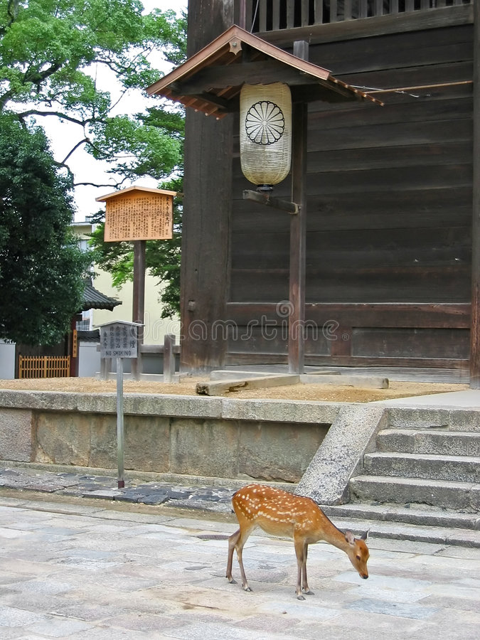 Download Deer stock photo. Image of deer, buildings, animal, nara - 464806