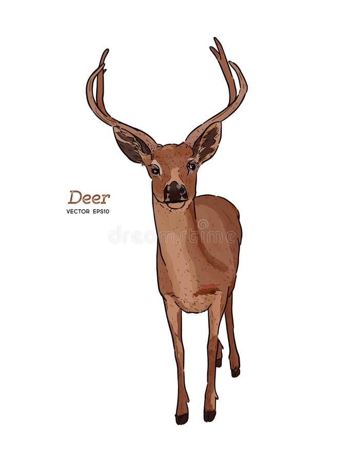 Deer, animal. Hand draw sketch vector stock illustration