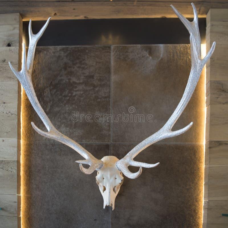 Deer antlers framed in alpine home stock image