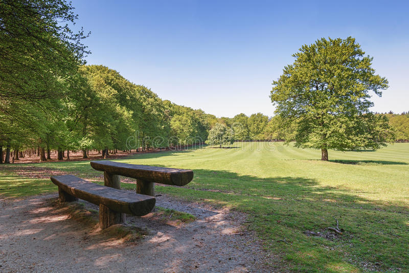 The deer camp of The Loo park located in Apeldoorn. In the Netherlands royalty free stock images