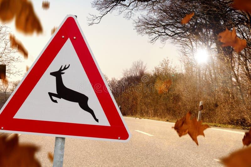 Deer crossing in autumn stock photography