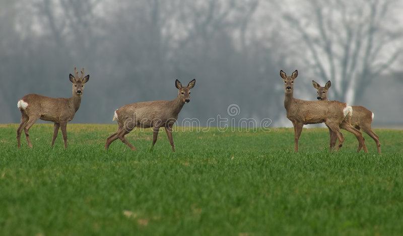 Deer family stock photo
