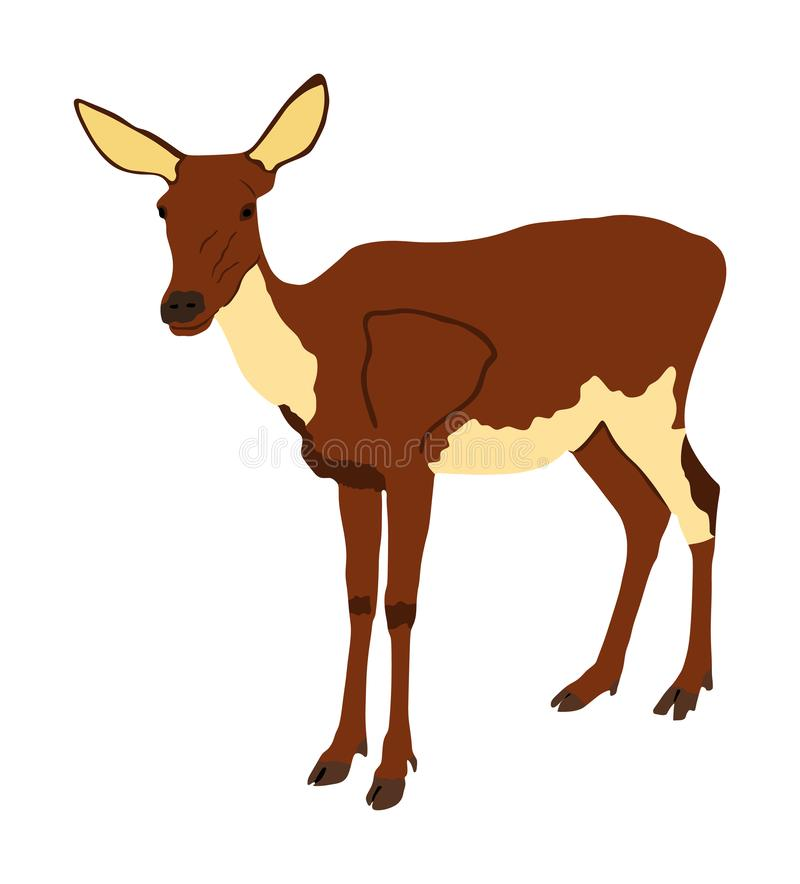 Deer female  illustration isolated on white background. Reindeer fawn. Proud Noble Deer in forest or zoo. Roe deer standing on alert looking. Doe isolated vector illustration