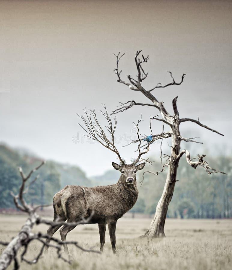 Deer on field royalty free stock photo