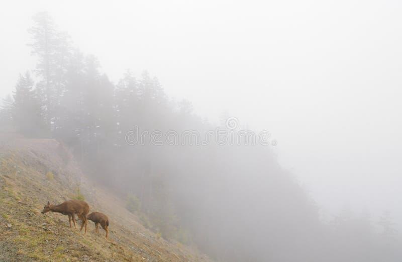 Deer On A Foggy Mountainside Stock Photography