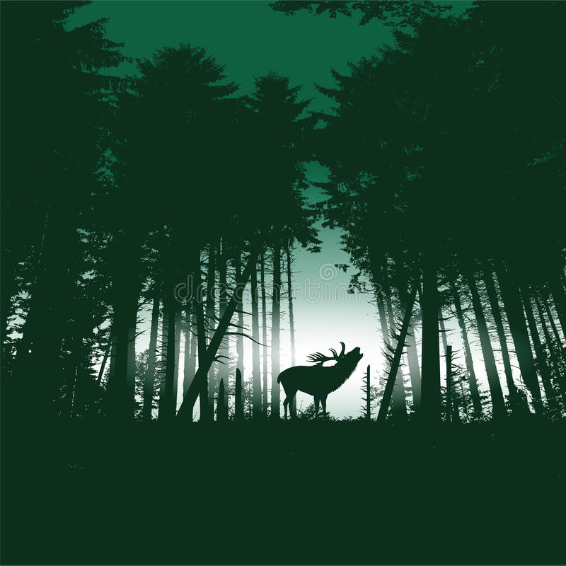 Download Deer In The Forest At Night Stock Vector - Image: 38915326
