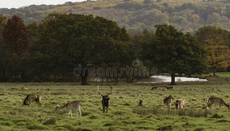 Deer in a forest scene stock photo
