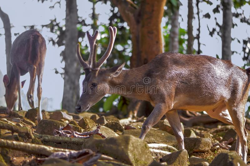 Deer in the forest wildlife stock image