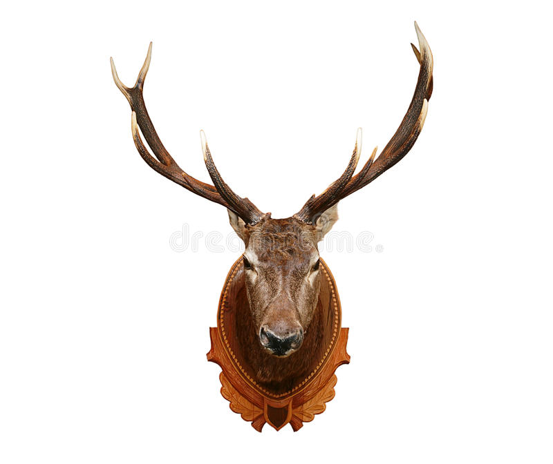 Deer head royalty free stock photography