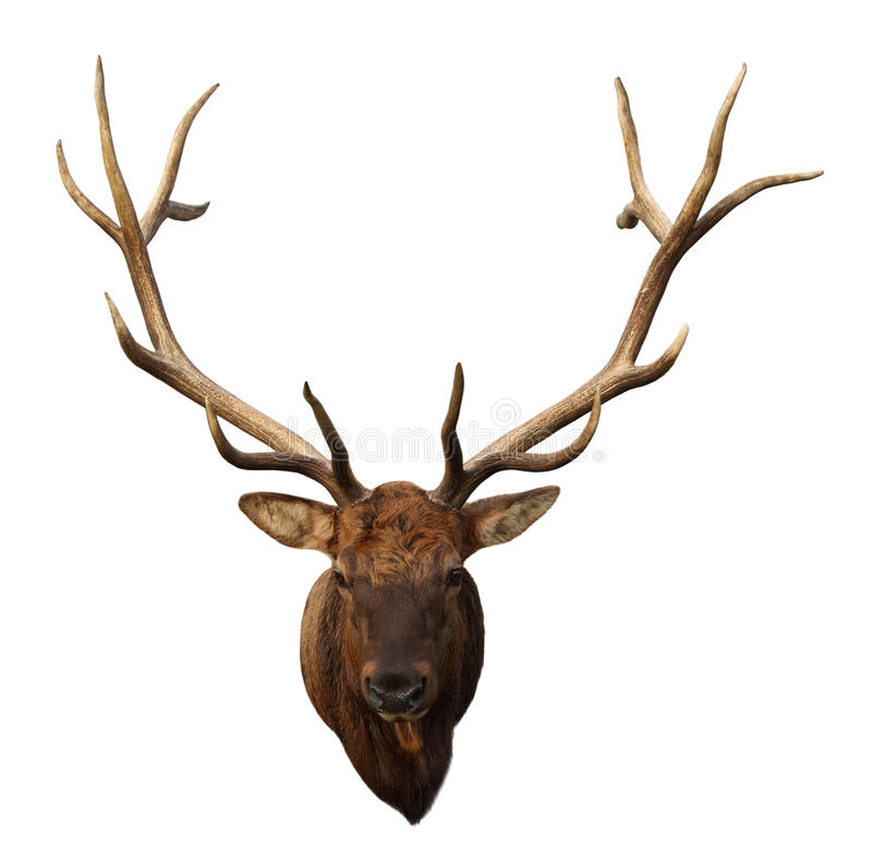 Deer Head royalty free stock photo