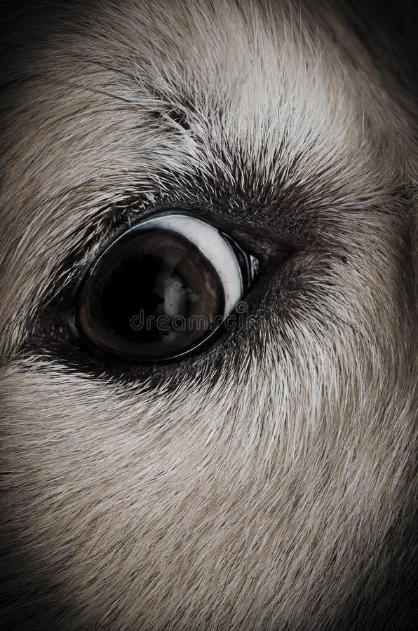 Animal eye closeup royalty free stock photo