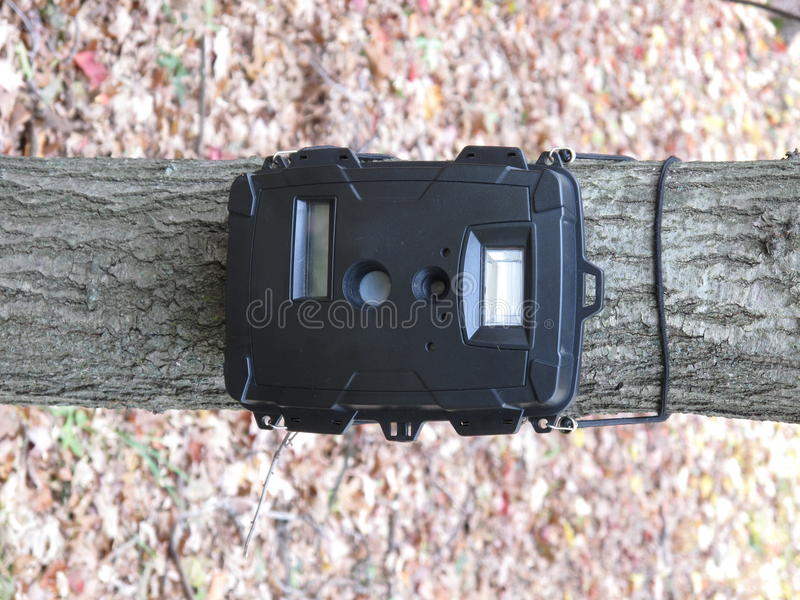 Deer hunting trail camera. A deer hunting trail camera on a tree in the woods ready to take pictures royalty free stock images
