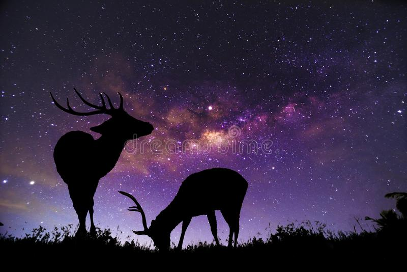 The deer image stands in the Milky Way constellation stock photos