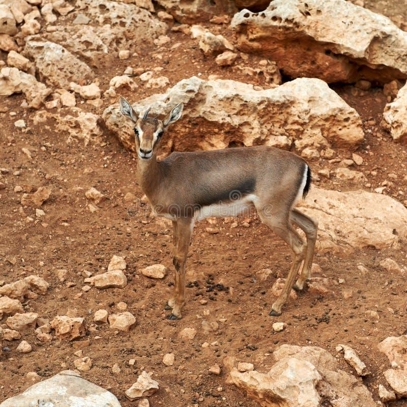 Free Deer In Zoo Stock Images - 22850344