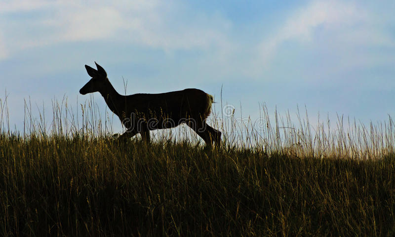 Download Deer In The Meadow At Sunset Stock Photo - Image: 35078880