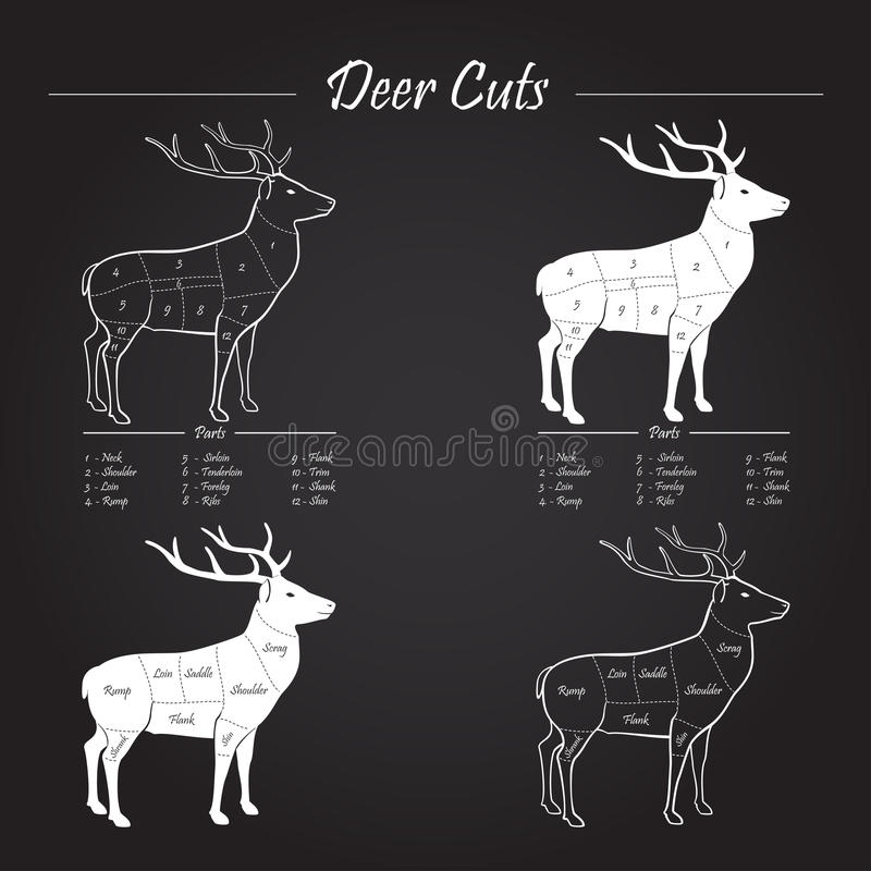 Diagram deer neck introduction to electrical wiring diagrams deer meat cut scheme elements on blackboard stock vector rh dreamstime com whitetail deer butchering diagram deer vital organs diagram ccuart Images