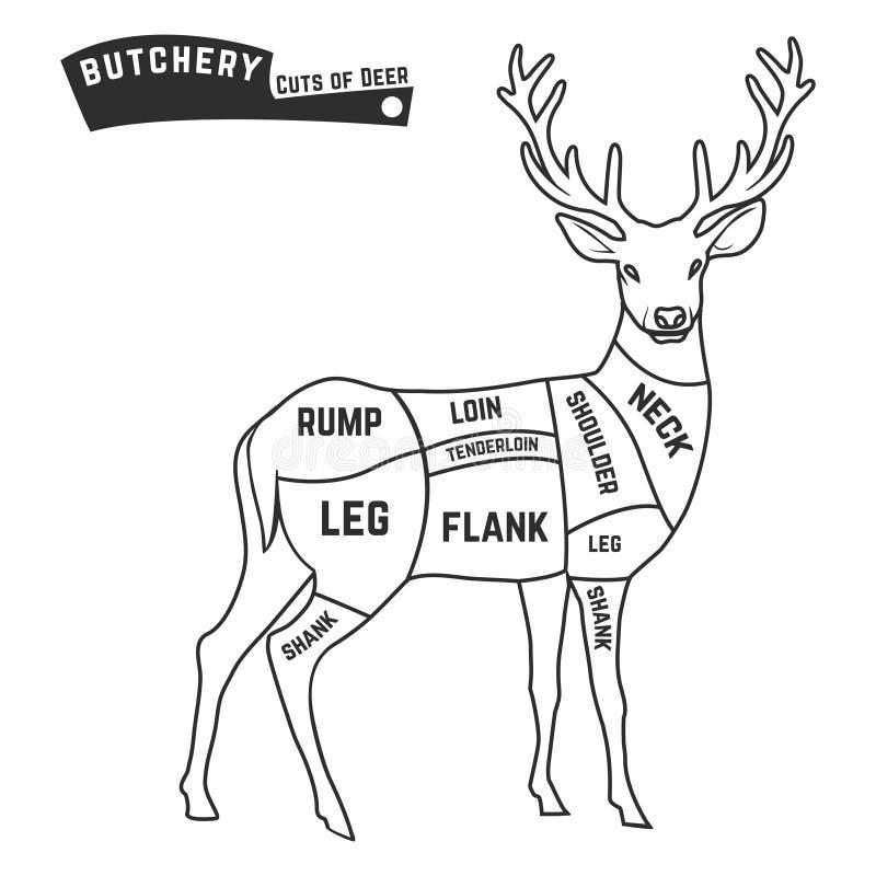 deer meat cuts stock vector