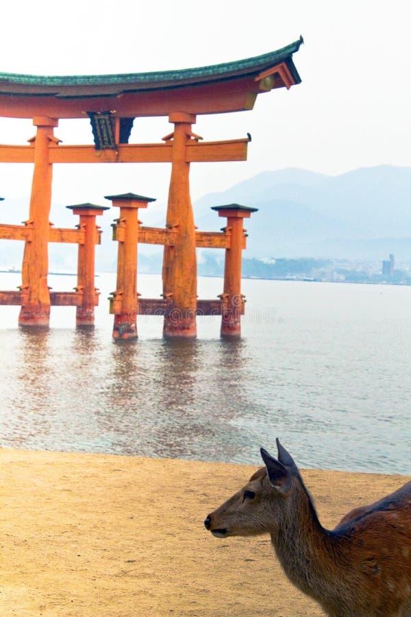 Deer at Miyajima island looking at the horizon royalty free stock photo