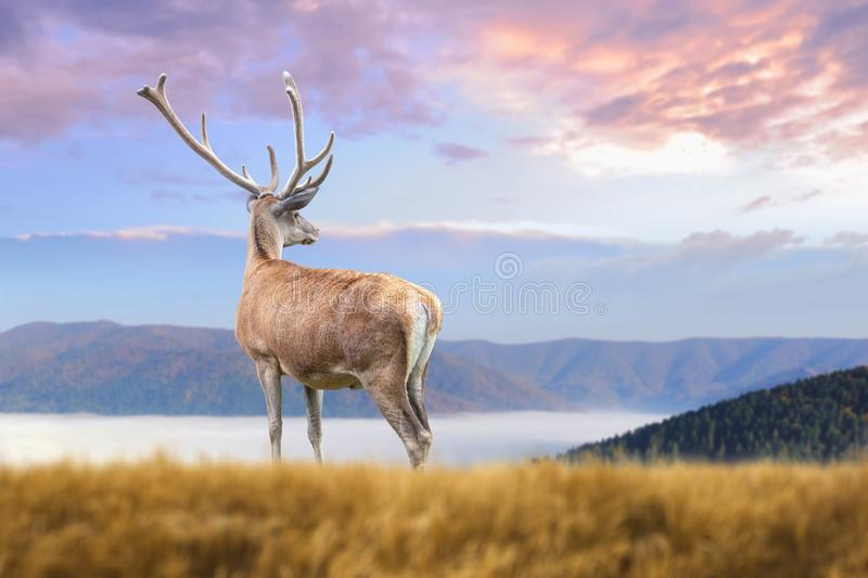 Deer on mountain background stock photo