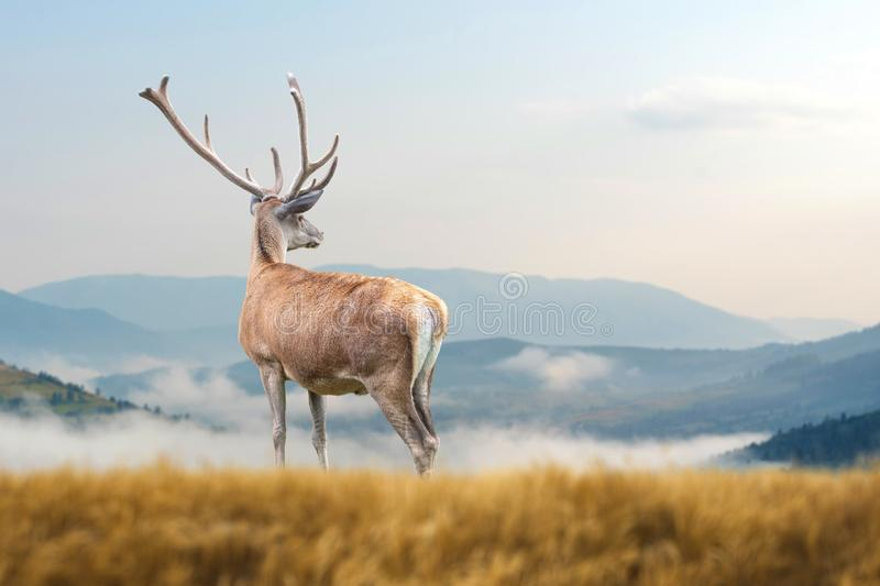 Deer on mountain background stock image