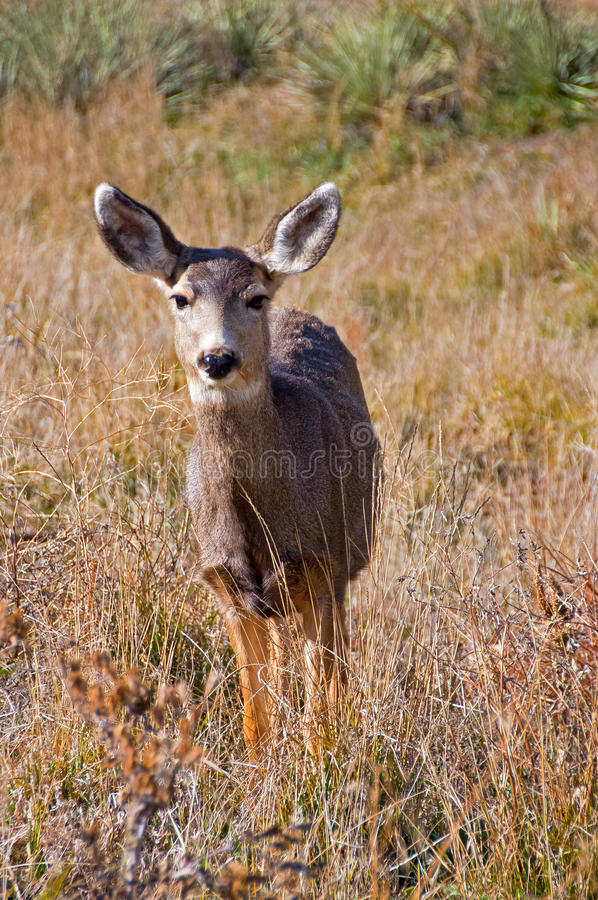 Deer One stock images