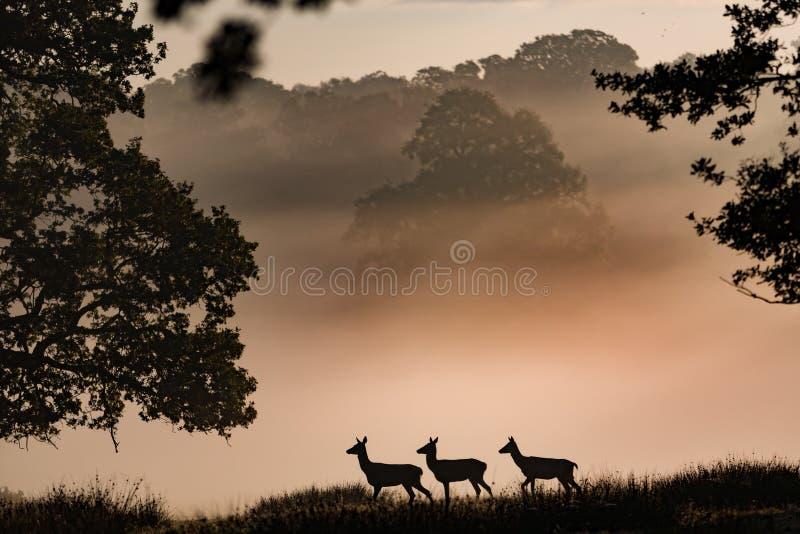 Deer Parade stock image