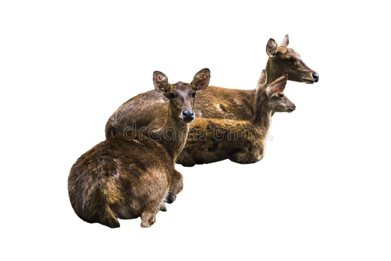 Deer pictures on a white background have different verbs stock image