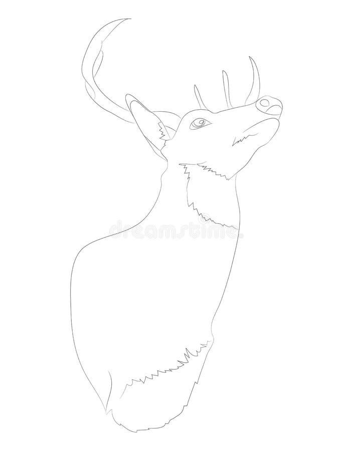 Deer portrait vector illustration, line drawing, vector vector illustration