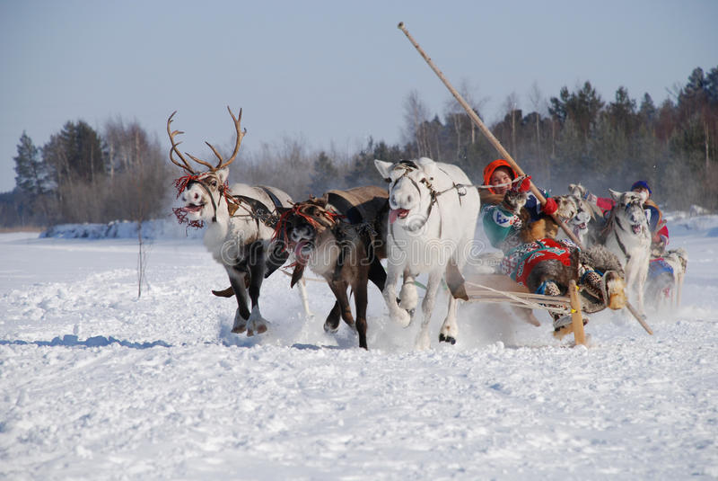 Deer racing stock photos