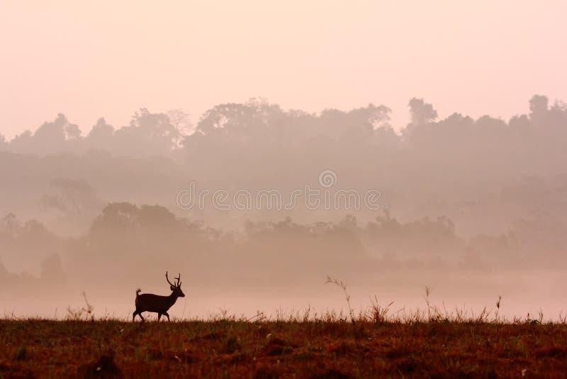 Download Deer running stock image. Image of wild, grassland, brown - 33339395