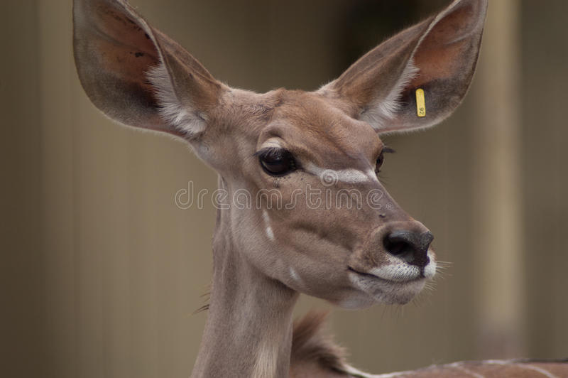 Deer's head close-up with bokeh background stock image