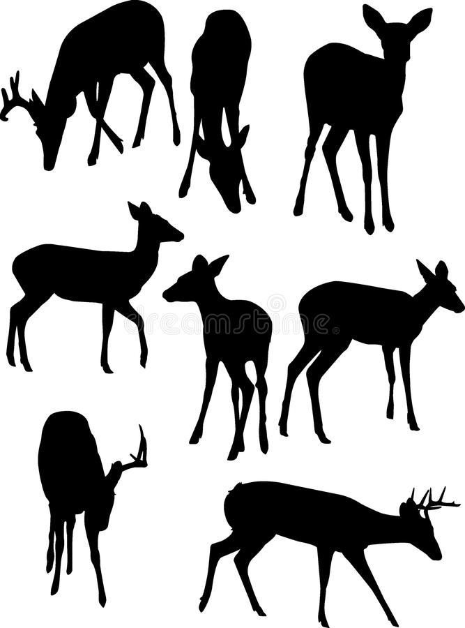 Deer Silhouettes. A vector illustration of some whitetail deer silhouettes isolated over a white background