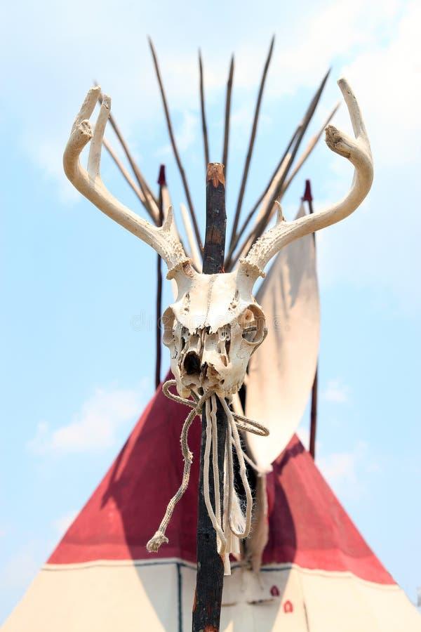 Deer Skull stock photo