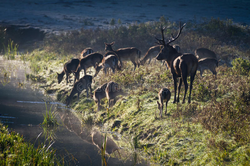 Download Deer Standing On The Frozen Meadow Near The River Stock Photo - Image of green, herd: 21659604