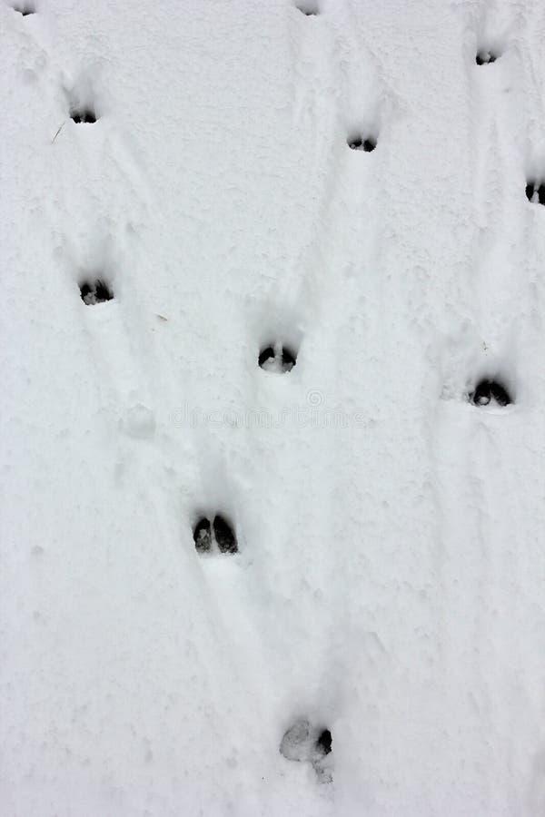 Download Deer tracks stock image. Image of many, animal, natural - 28322385
