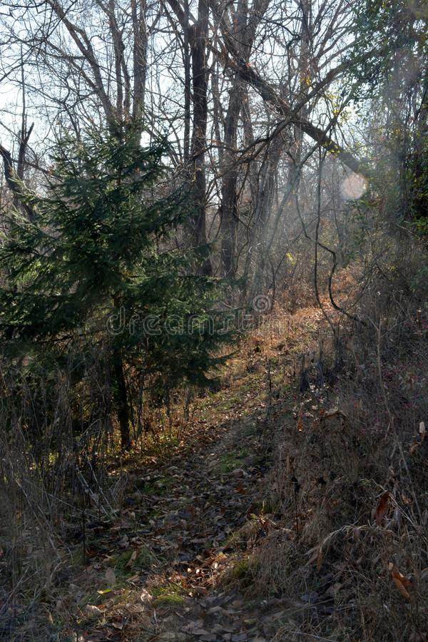Deer trail in deep woods stock photography