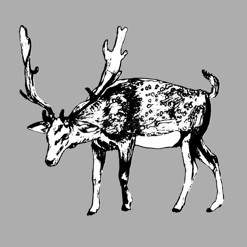 Deer. Vector Hand Drawn Ink Illustration. Isolated Image