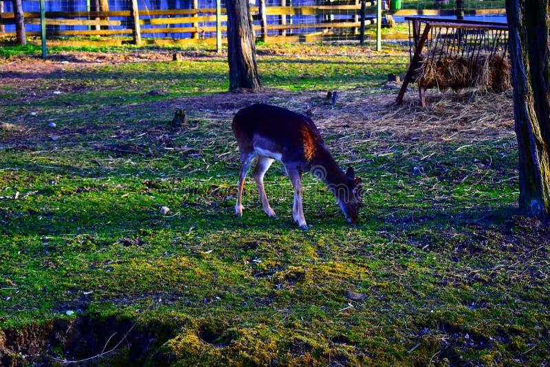 Deer waiting for the spring season stock photos