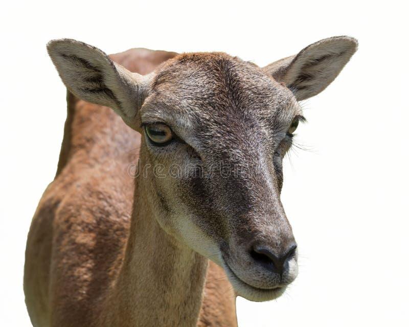 Download Deer Walking In The Park Stock Photo - Image: 83715242